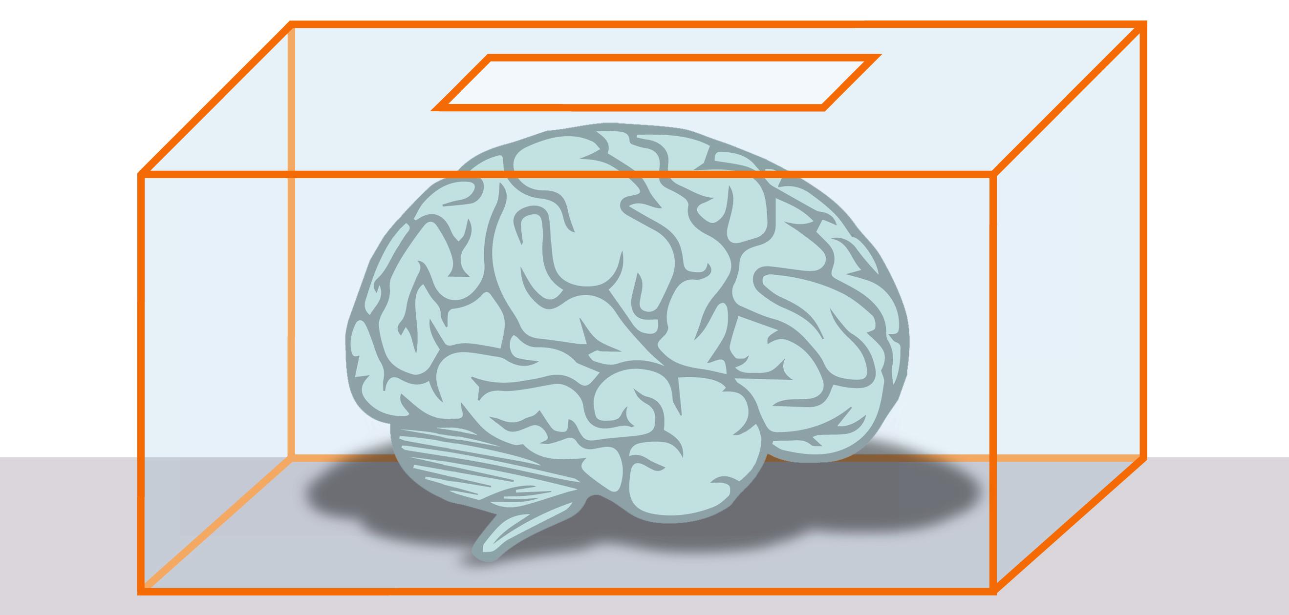 cerebro-en-urna